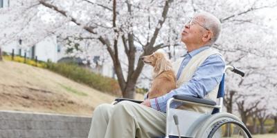 Triết lý ikigai của người Nhật và bí quyết sống lâu trăm tuổi, sống đời viên mãn an nhiên