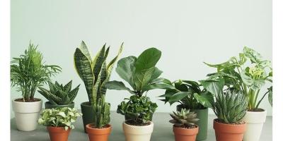 5 loại cây phong thủy mang lại may mắn và tài lộc cho gia chủ