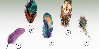 Trắc nghiệm: Chọn một chiếc lông vũ để khám phá sức mạnh tiềm ẩn bên trong bạn