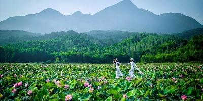 Đầm sen Trà Lý xứ Quảng đẹp như tranh vẽ dưới góc máy của Nguyễn Khánh
